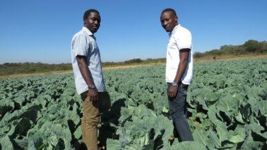 Photo of Kenya opens $20.4m youth agribusiness programme