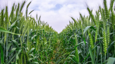 Photo of South Africa: Bumper agro exports could exceed last year's R140 bln mark