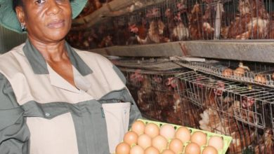 Photo of Implement policies to boost poultry production — Bossway Farms to government