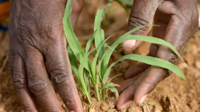 Photo of Farmers 'want greater role' in agric projects