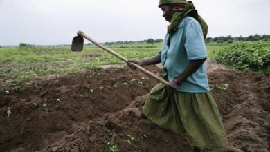 Photo of Nigerian firm gets $5 million UN credit to help small-scale farmers