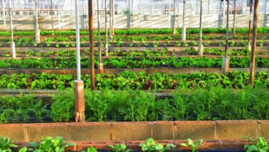 Photo of The time is ripe for African countries to grow their urban agriculture