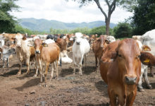 Photo of Livestock Boss Calls For Action Against Animal Rustlers