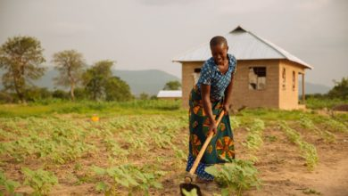 Photo of Former President Kufuor writes: Africa's smallholder farmers are the linchpin to economic success