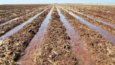 Photo of How to reverse soil degradation on your farm