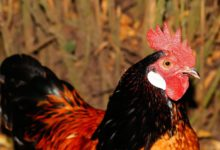 Photo of Inspired by DP Ruto, Bungoma man earns good cash from poultry farming