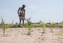 Photo of Africa: For a Hungry Continent, Africa Does Poorly on Agriculture
