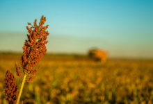 Photo of Fortifying crops