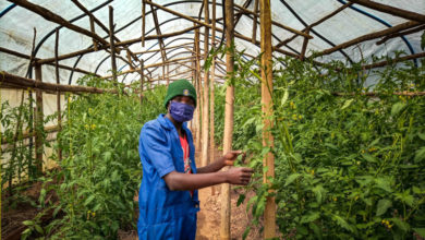 Photo of How Sh30 billion debt ruined 3 Arusha horticulture farms