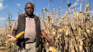 Photo of South African farmers dream of drought cover on climate front line