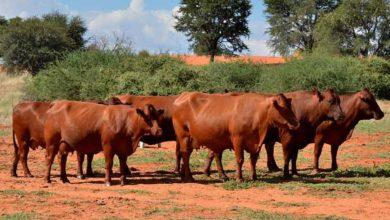 Photo of Namibia: Start Farming Now Says Dedicated Millennial Female Part Time Farmer