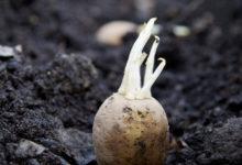 Photo of Nakuru Farmers Receive Free Certified Potato Seed