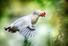 Photo of No paltry measures as poultry master plan aims to fix chicken industry challenges