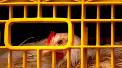 Photo of Dying Poultry Sector: Who is responsible?