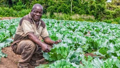 Photo of UN agency grants 150 mln USD for family farming in Angola