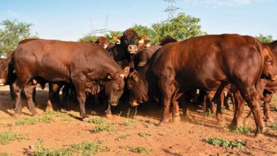 Photo of Namibia detects new foot and mouth disease virus strain