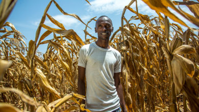 Photo of Why agriculture remains unattractive to youth – Heifer report