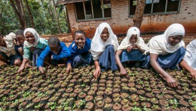 Photo of Investing in Youth in Agriculture will mitigate the impact of climate change