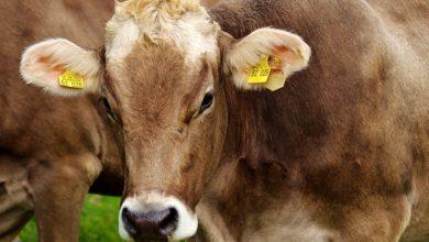 Photo of Strengthening livestock safety response