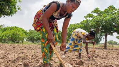 Photo of Nigeria's Small Holding Farmers Still Challenged By Financial Accessibility, Says Oniru