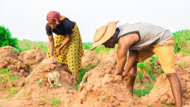 Photo of Petitioners want small-scale farmers categorised as vulnerable group