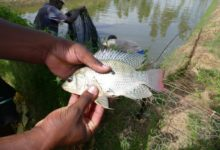 Photo of Kenya says aquaculture development on course to boost food security
