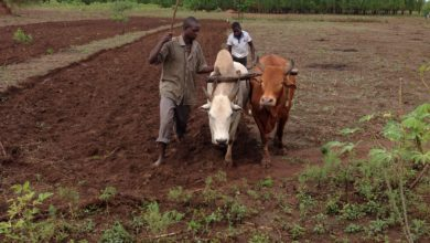 Photo of Uganda: Access to Land, Capital Hampering Youth's Involvement in Agri-Business