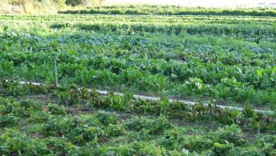 Photo of Expert lists health benefits of organic farming