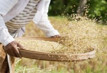 Photo of CBN Distributes Inputs Worth N820m To 3,102 Rice Farmers