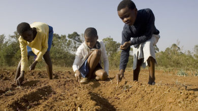 Photo of 10 schools to benefit from farming training and seed bank