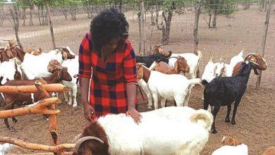 Photo of Zimbabwe: Goat Farming Boon for Binga Women