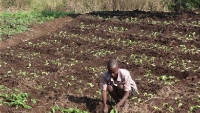 Photo of Cameroon fine-tunes a draft law on organic agriculture