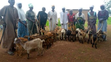Photo of Re-greening Africa: World Vision Ghana provides small ruminants to farmers in Bawku West