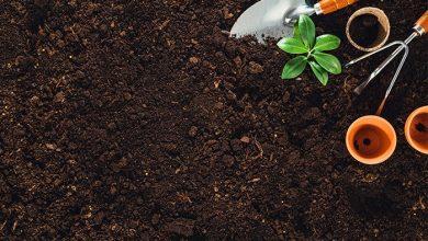 Photo of Students help create fertilizer app for Tanzanian farmers