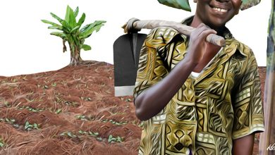 Photo of Small scale farmers in Kenya facing financial starvation