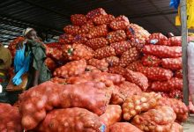 Photo of Senegalese onion farmers in tears over glut