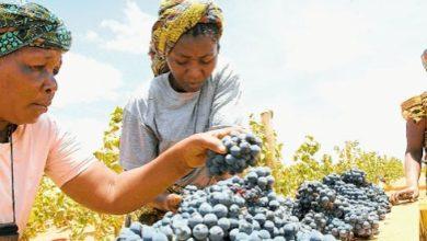 Photo of Small scale grape farmers Tanzania optimistic about markets
