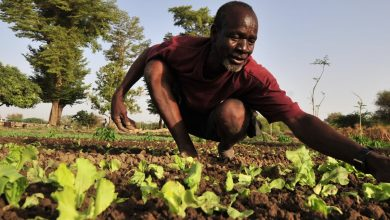 Photo of African agriculture without African farmers