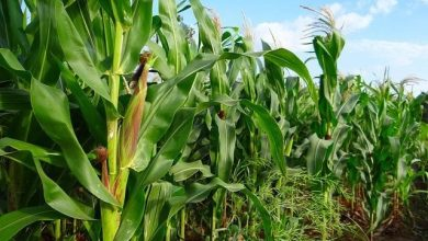Photo of Agriculture sector records good growth