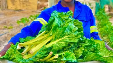 Photo of Namibia: Young Local Food Farmer Utilizes Home Garden to Enhance Household Food Security and Livelihood