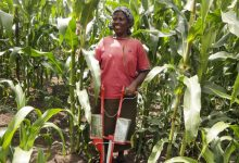 Photo of Kenyan Farmers Reaping Big From Conservation Agriculture