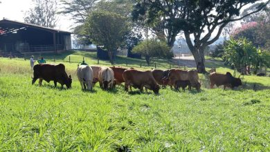 Photo of A climate-smart success story for African agriculture