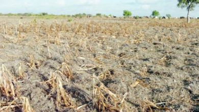 Photo of Agricultural premiums hit Sh1 billion mark