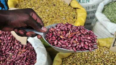 Photo of COVID-19 leads to African agricultural innovation