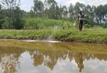 Photo of Procurement graduate ventures into fish farming to fend for family